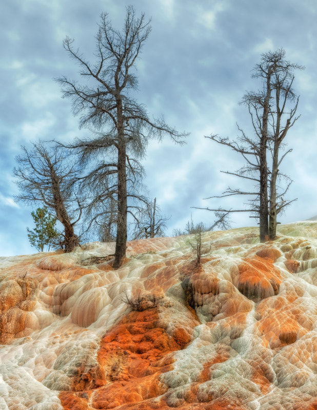 Photograph Hot Spring Trees by Vincent James on 500px