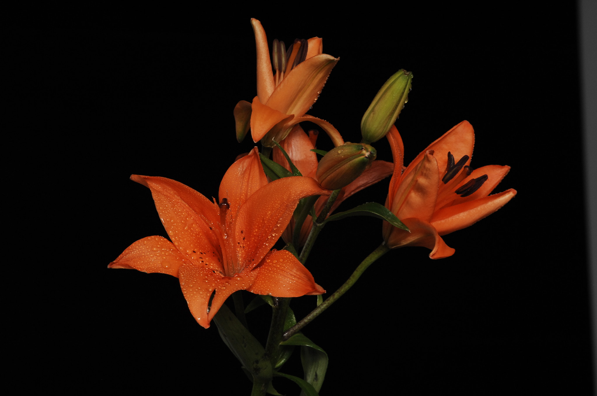 Photograph Lilies and leaves by Cristobal Garciaferro Rubio on 500px