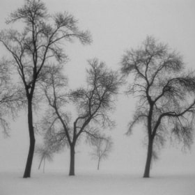 Trees In The Fog by Jim  Sisko (siskokid)) on 500px.com