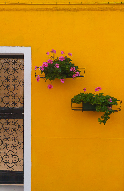 Photograph Burano yellow by  DECK on 500px