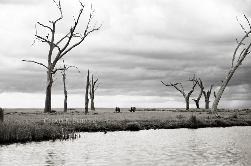 Bayou Horses
