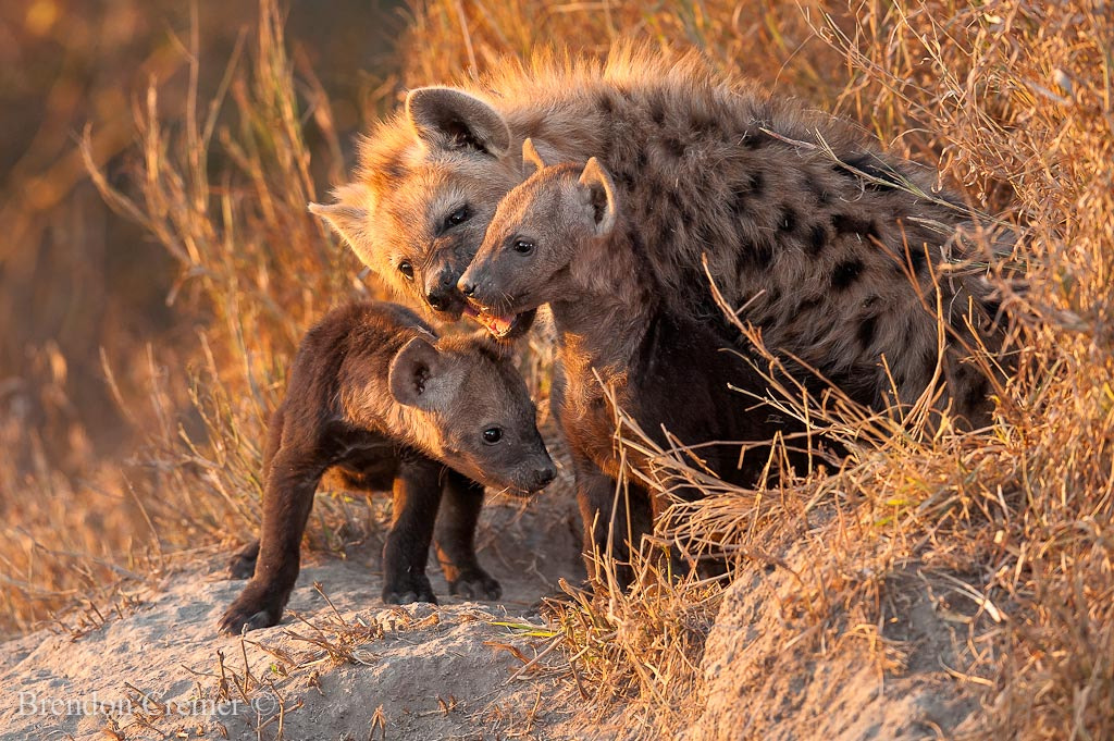 Photograph Hyaena Den by Brendon Cremer on 500px