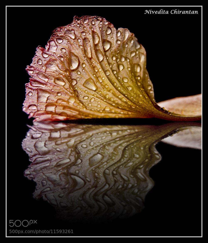 Photograph Reflection by Nivedita Chirantan on 500px