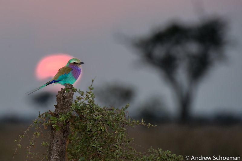 Photograph Roller sunset by Andrew Schoeman on 500px