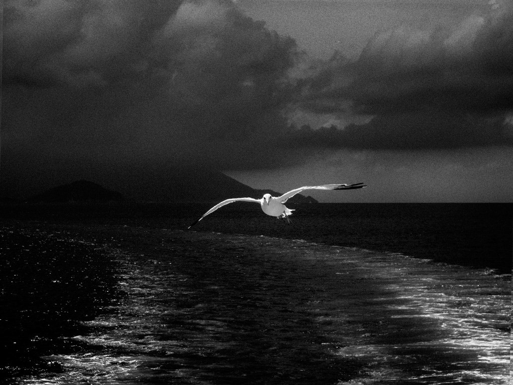 Photograph sooner or later, I will be flying away by Beau Rivage on 500px