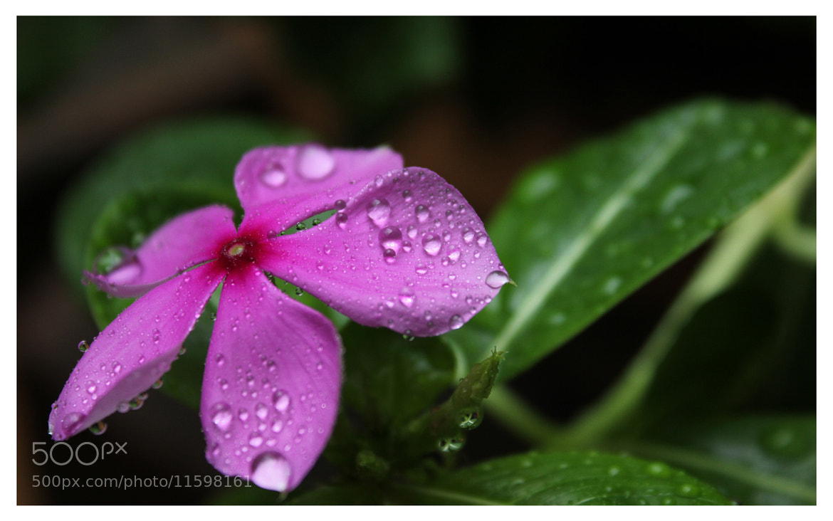 Photograph Decorating Droplets  by Yashovardhan Sodhani on 500px