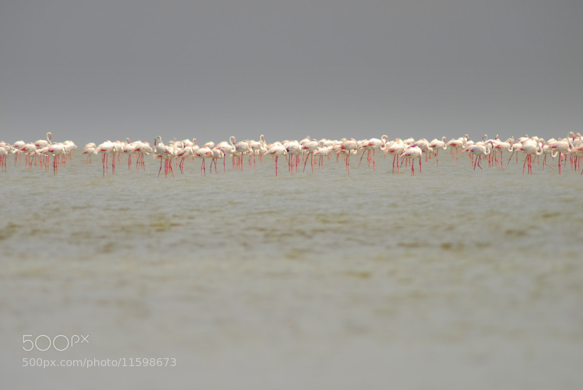 Photograph Flamingo's  by Harry de Visser on 500px