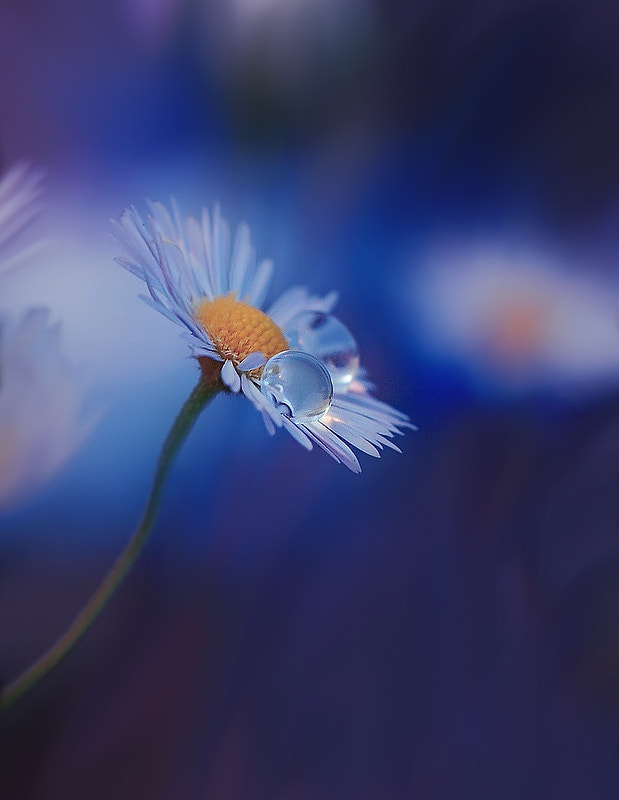 Photograph Blue Night... by Juliana Nan on 500px