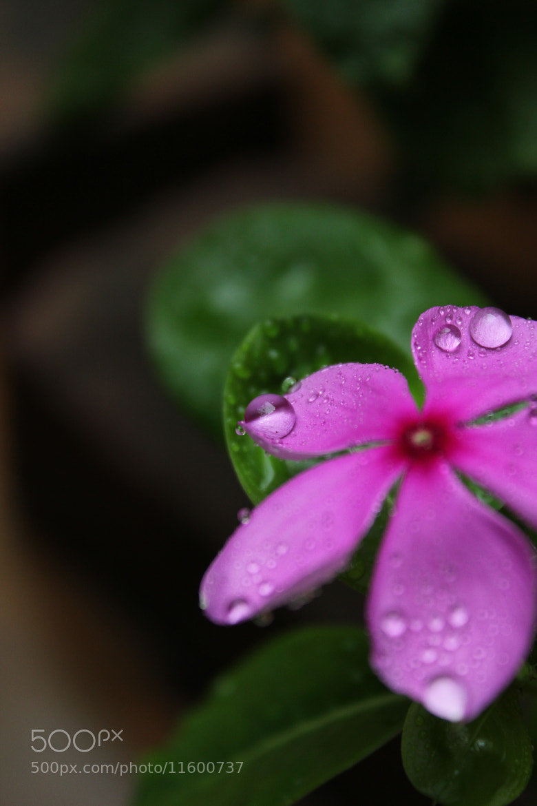Photograph Decorating Droplets vertical prespective by Yashovardhan Sodhani on 500px