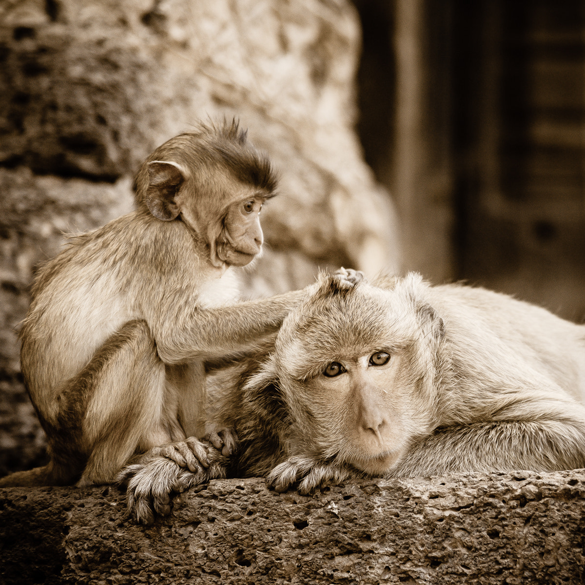 Photograph Grooming by Ramesh Indhewat on 500px