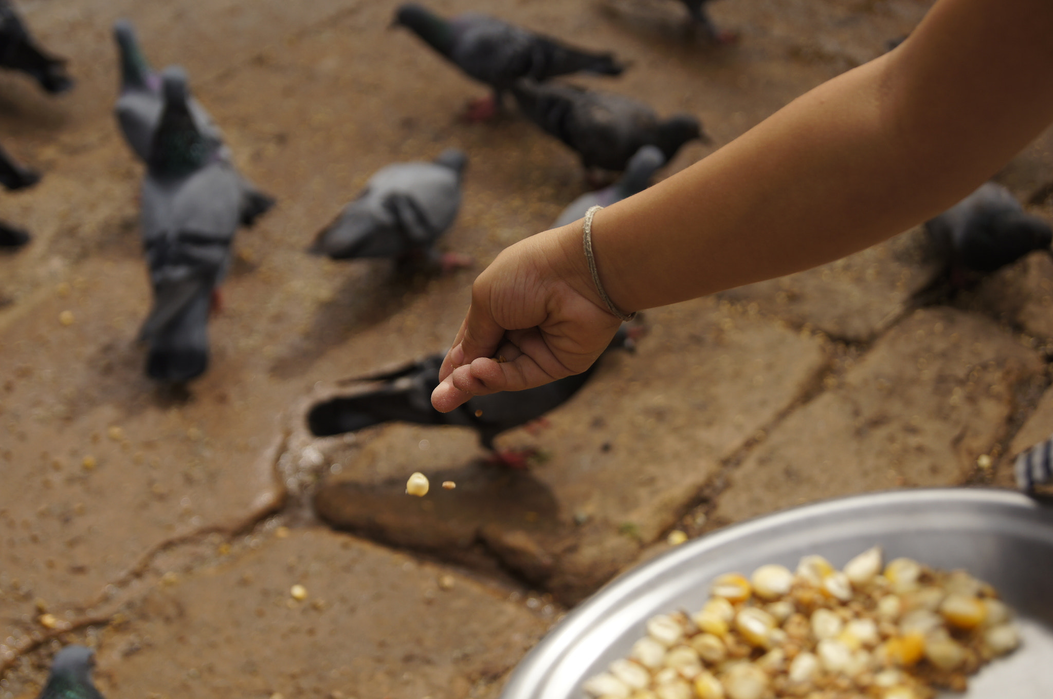 Photograph Feeding the Pigeon by Afzal Khan on 500px