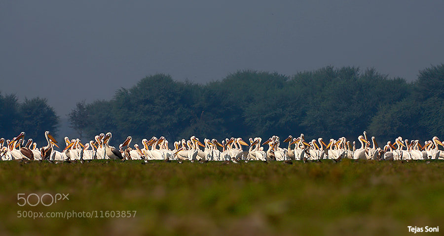 Photograph Terrific Gang Of Thol by Tejas Soni on 500px