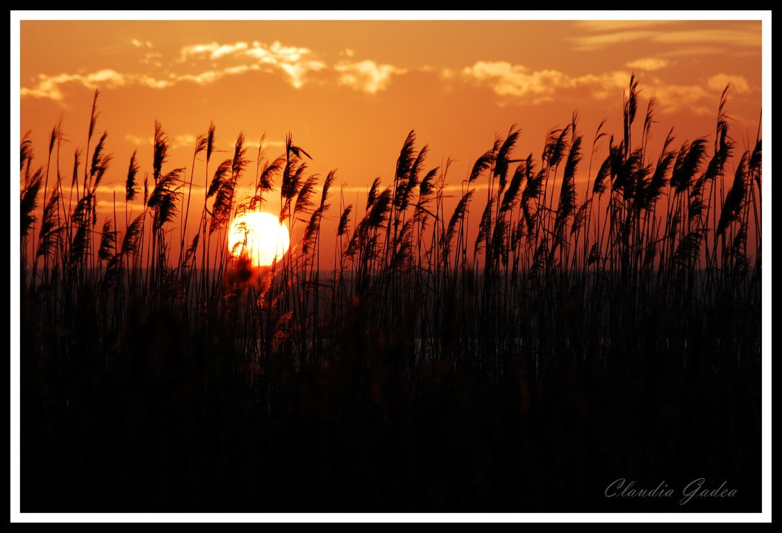 Photograph Silent sunset by Claudia Gadea on 500px