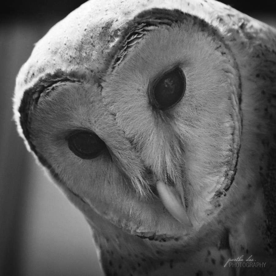 Photograph The owl-3 by Partha Das on 500px