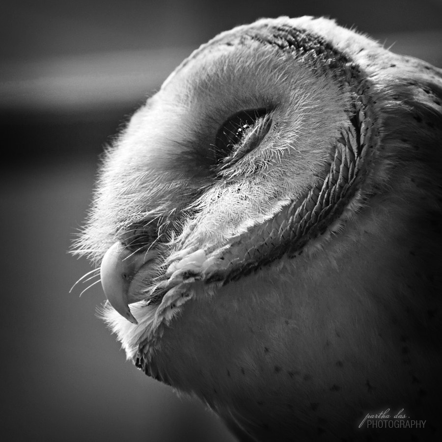 Photograph The owl-1 by Partha Das on 500px