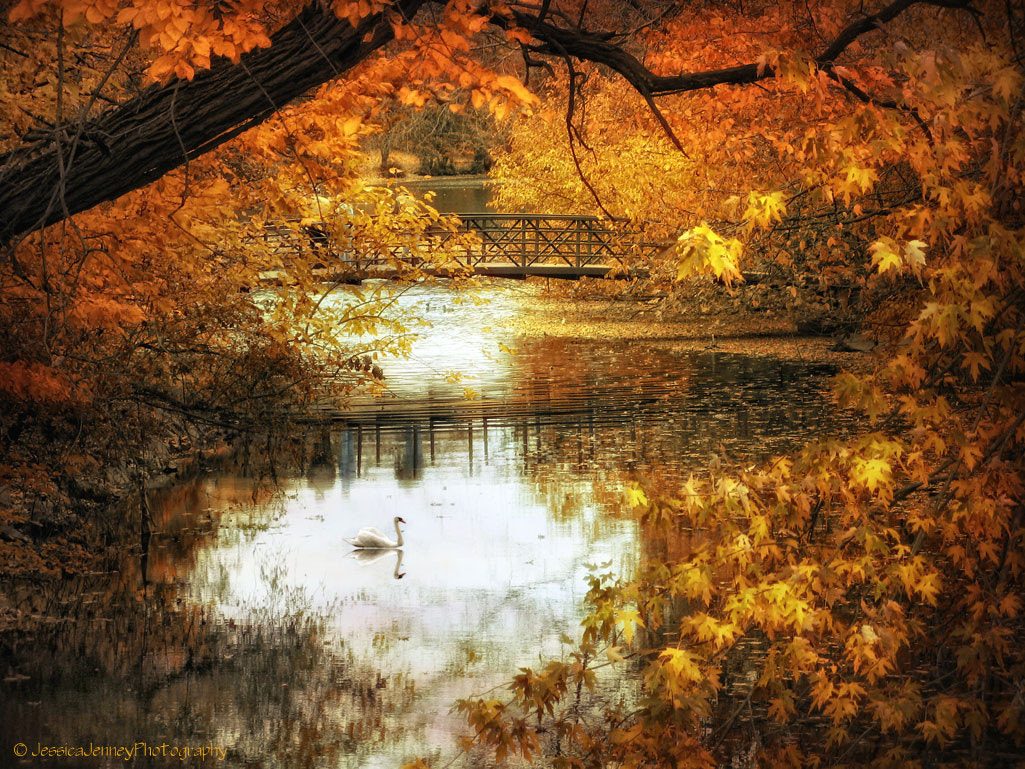 Photograph Golden Pond by Jessica Jenney on 500px