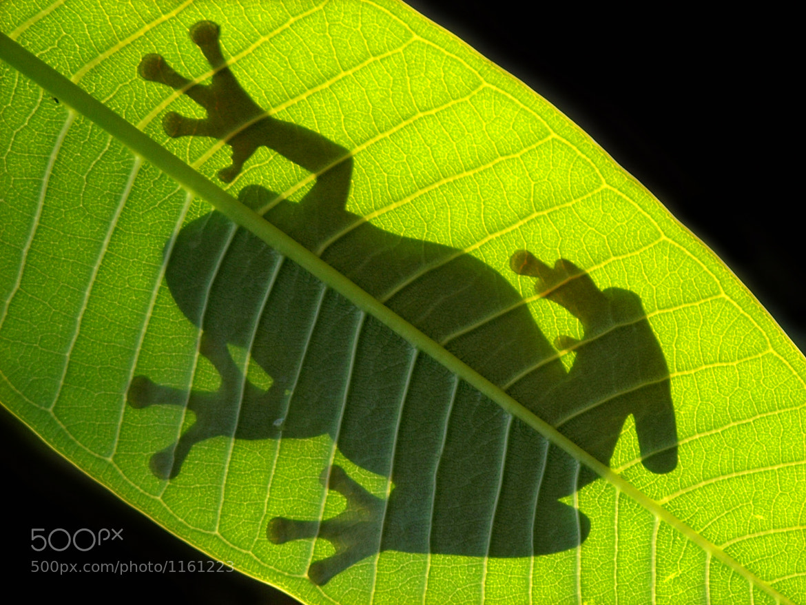 Photograph The shadow by Irawan Subingar on 500px