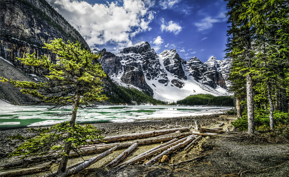 Photograph Moraine Lake - windy tree  by Philippe Brantschen on 500px