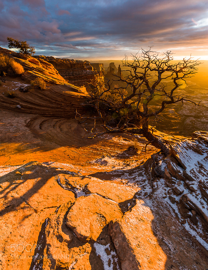 Photograph Lonely Tree by Hans Kruse on 500px