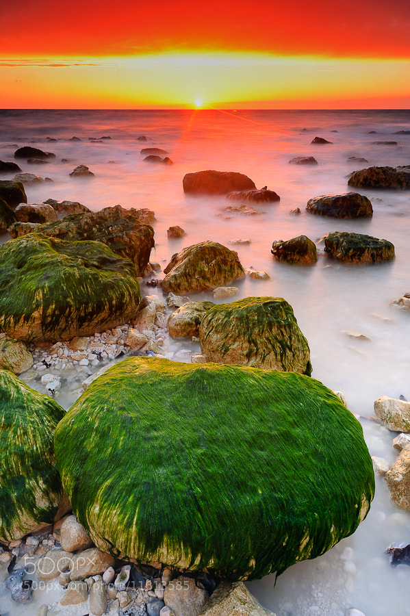 Photograph Green Power by Alexis Dubois on 500px