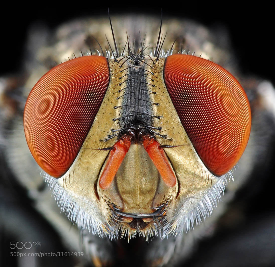 Photograph FLY by Henrikus Sumantri on 500px