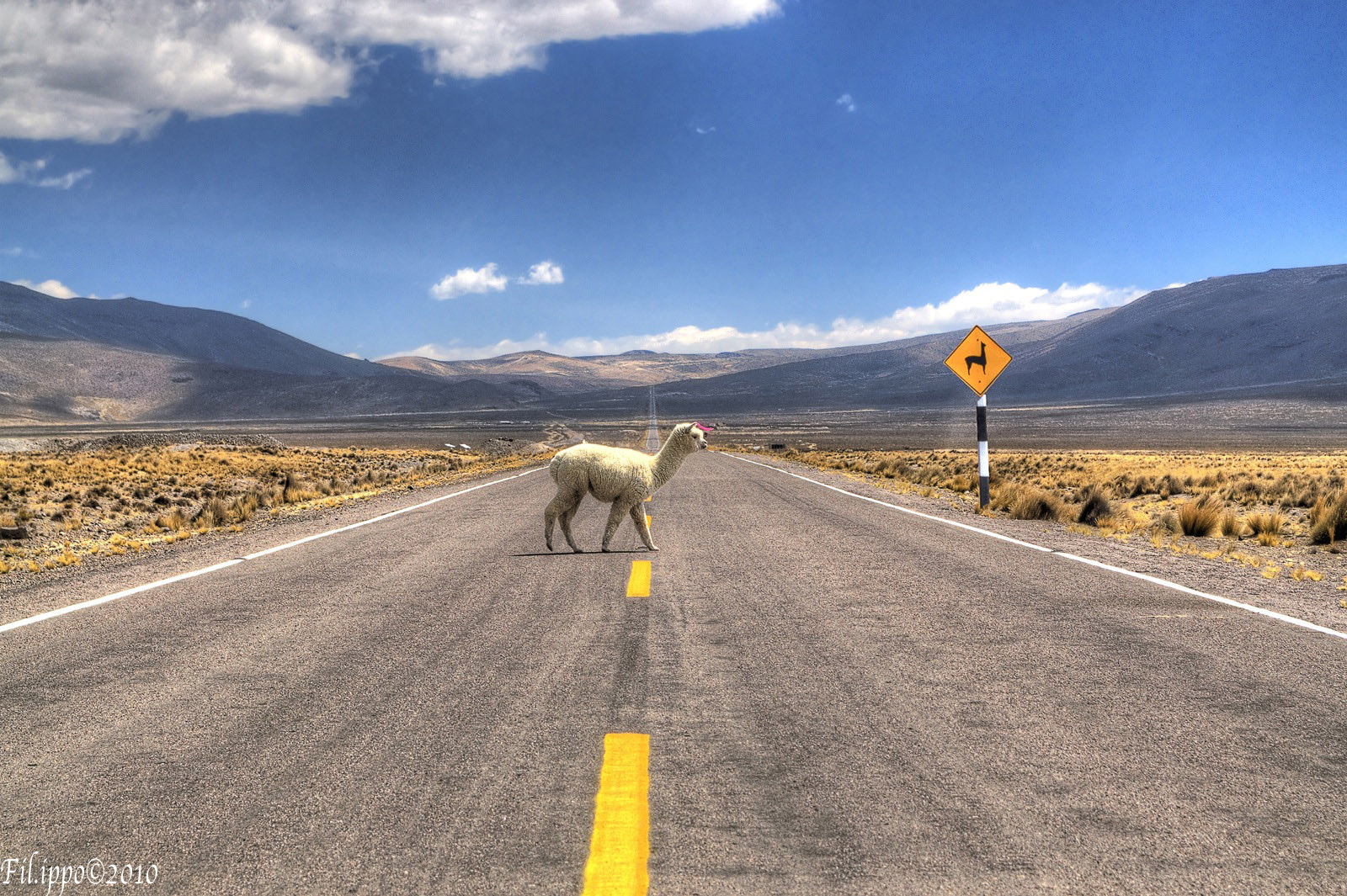 Photograph Pedestrian Alpaca by Filippo Bianchi on 500px