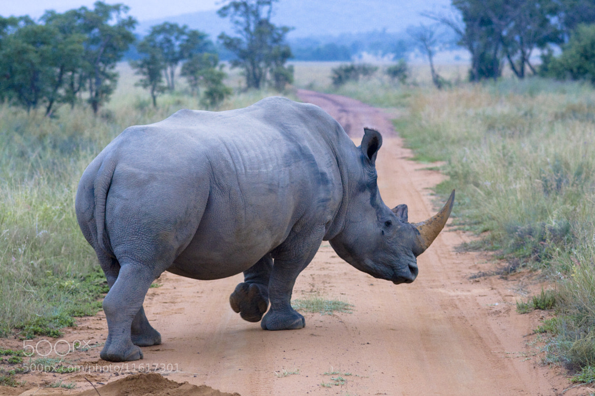 Photograph Rhino by Esther Zeschky on 500px