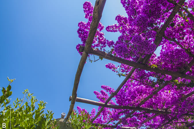 Colors of Amalfi by Heather Balmain on 500px
