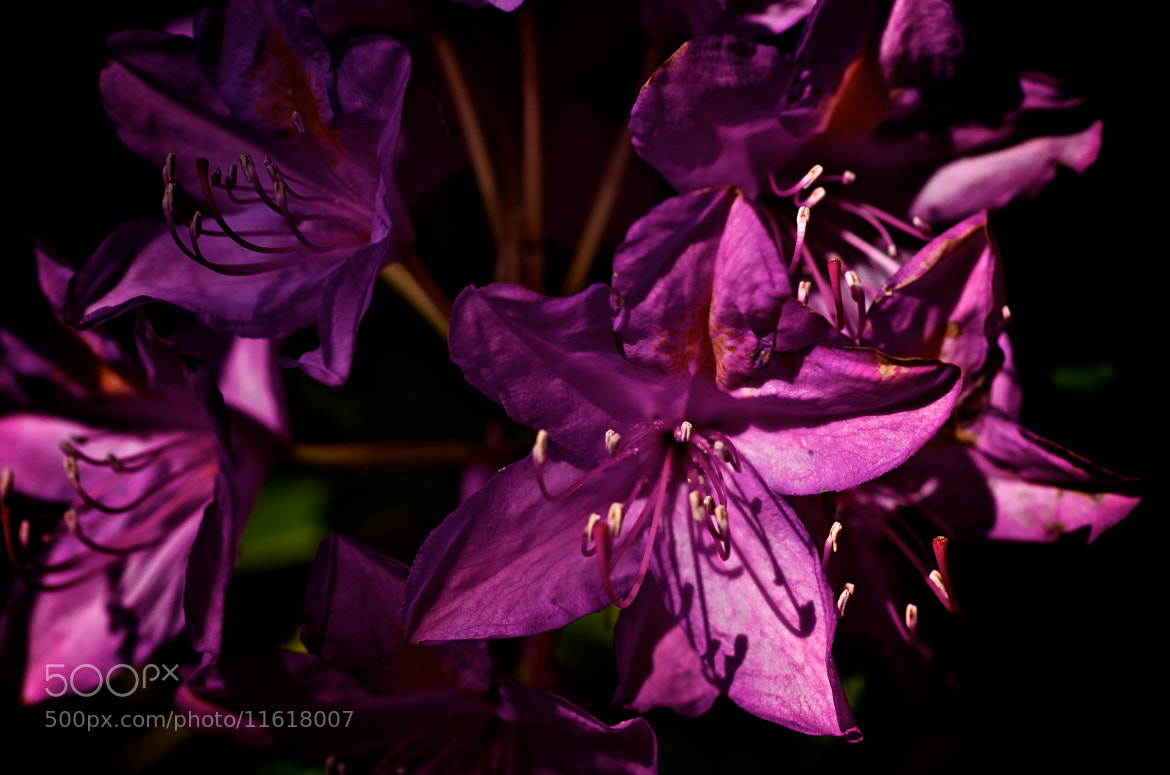 Photograph Purple by Wilfried Schreder on 500px