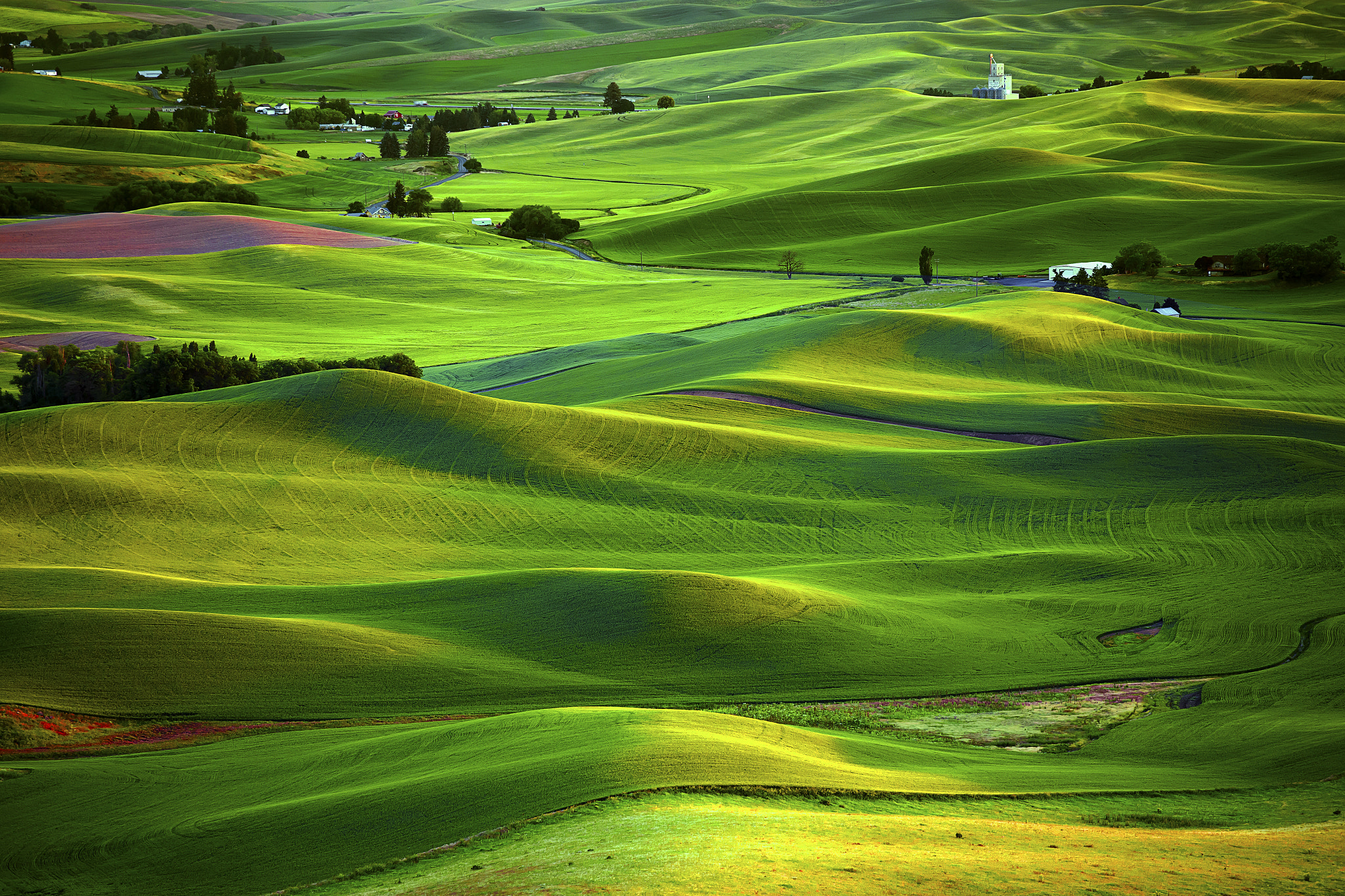 palouse ads