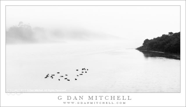 Photograph Birds, Evening Fog, Rodeo Lagoon by G Dan Mitchell on 500px