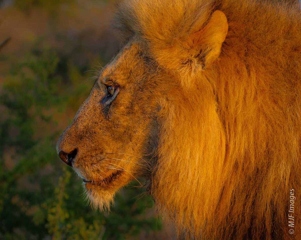 Photograph Profile of the King by Michael Flaherty on 500px