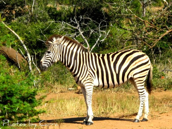 Photograph Stripes by Carra Riley on 500px