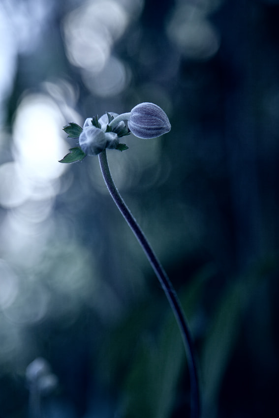 Photograph S by Andrea Jancova on 500px