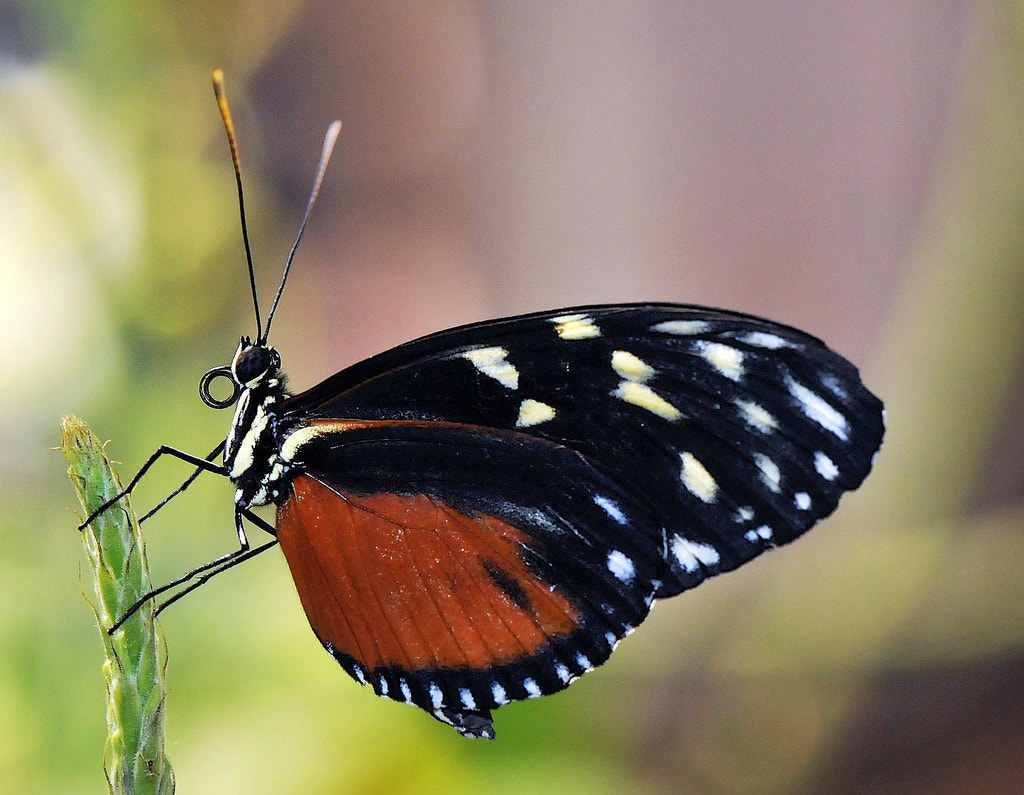 Photograph Butterfly by Muhammad Al-Qatam on 500px