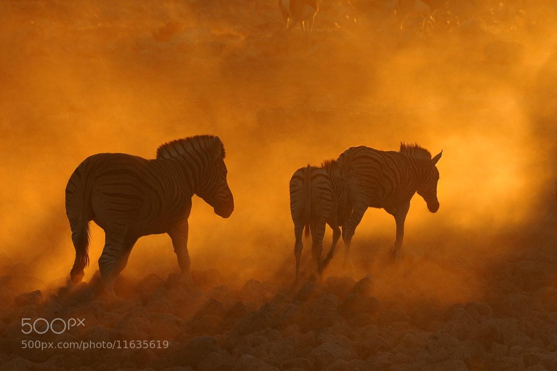 Photograph Sunset at Okaukeujo, Namibia 2 by Grobler du Preez on 500px
