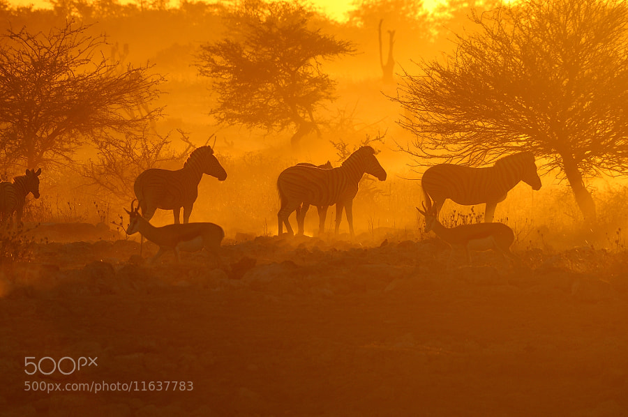 Photograph Sunset at the Okaukeujo waterhole 4 by Grobler du Preez on 500px