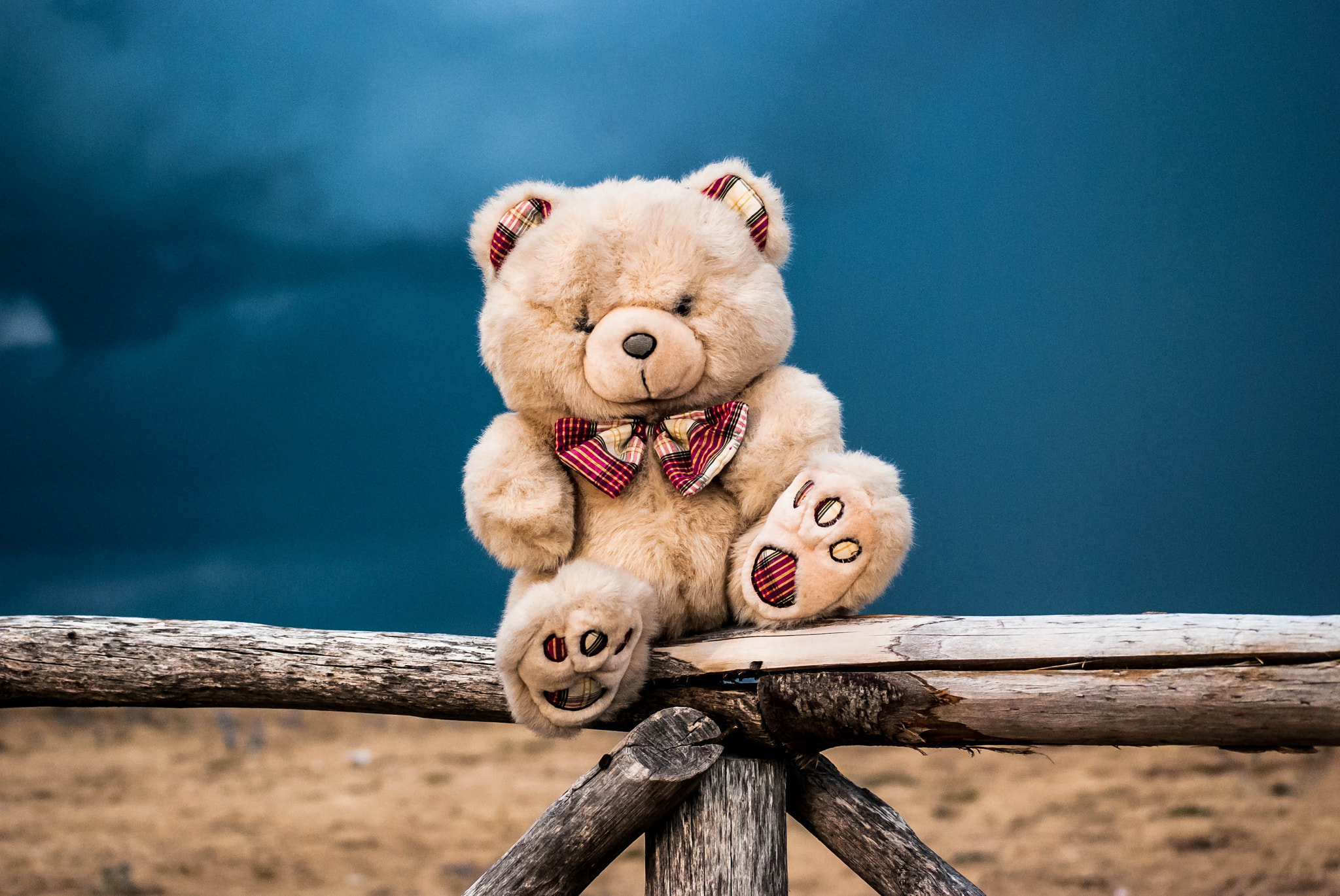 Photograph Country Bear by Giusy Ciampetti on 500px