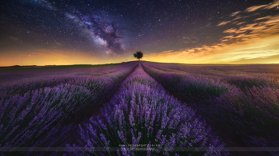 The Lavender Field and Milky Way by Jesús M. García on 500px.com