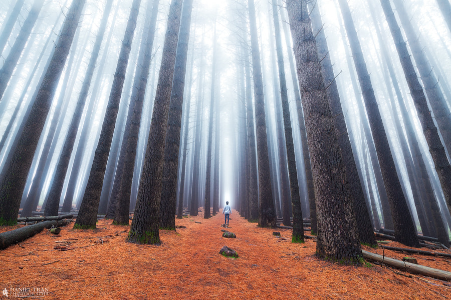 Misty Forest by Daniel Tran on 500px.com