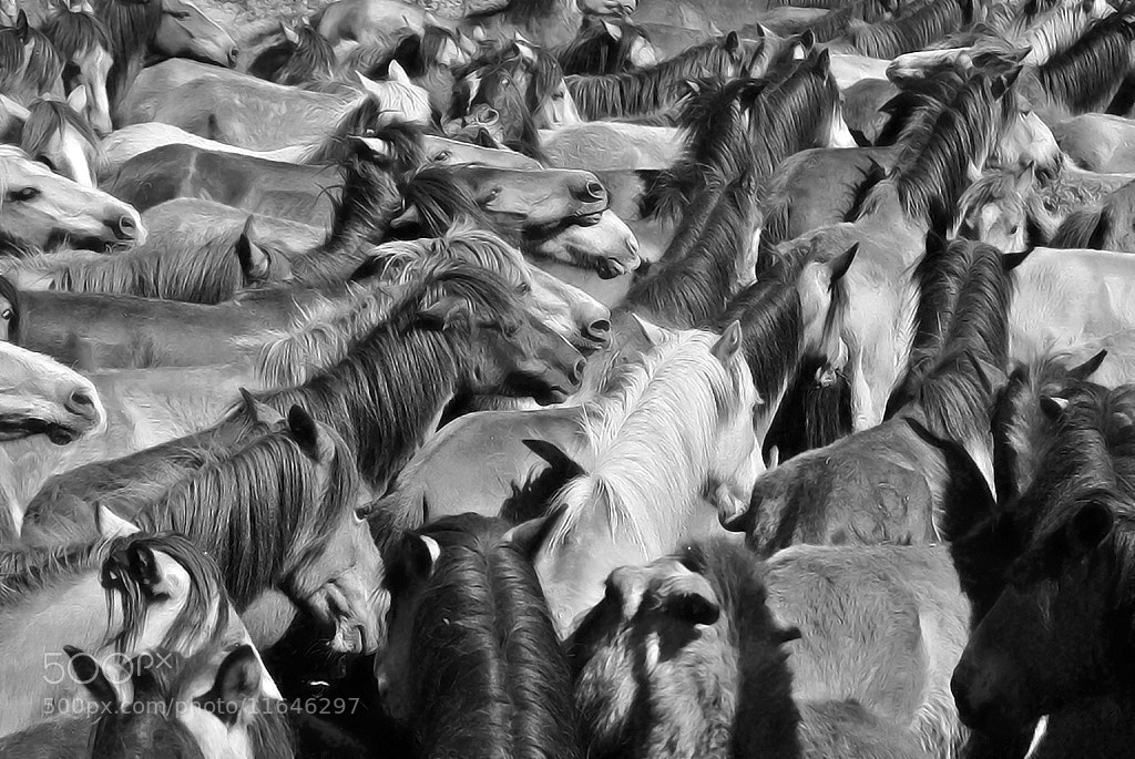 Photograph Curros de Oiã BW by António Marciano on 500px