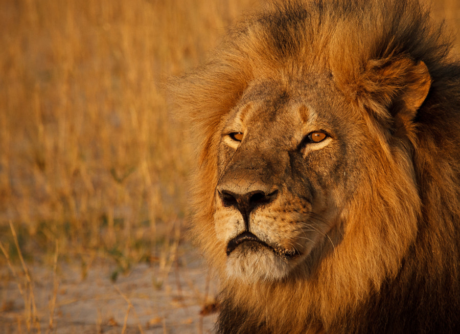 Portrait of Cecil by Ed Hetherington on 500px.com