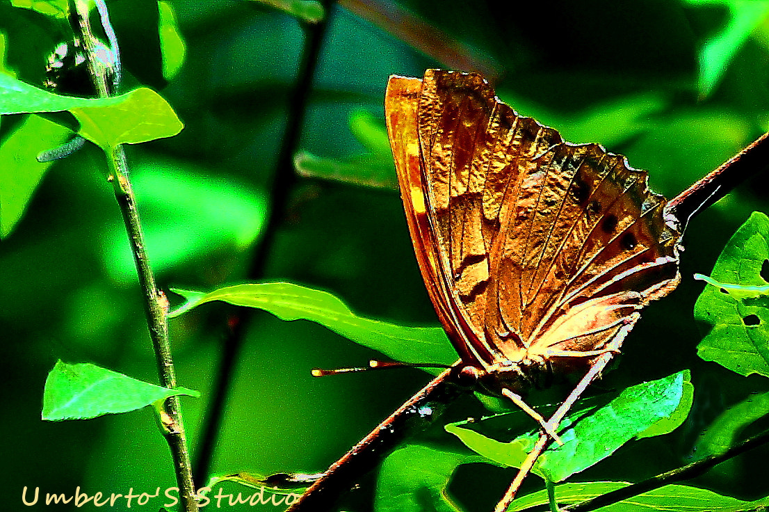 Photograph Butterfly by Humberto Reyno on 500px