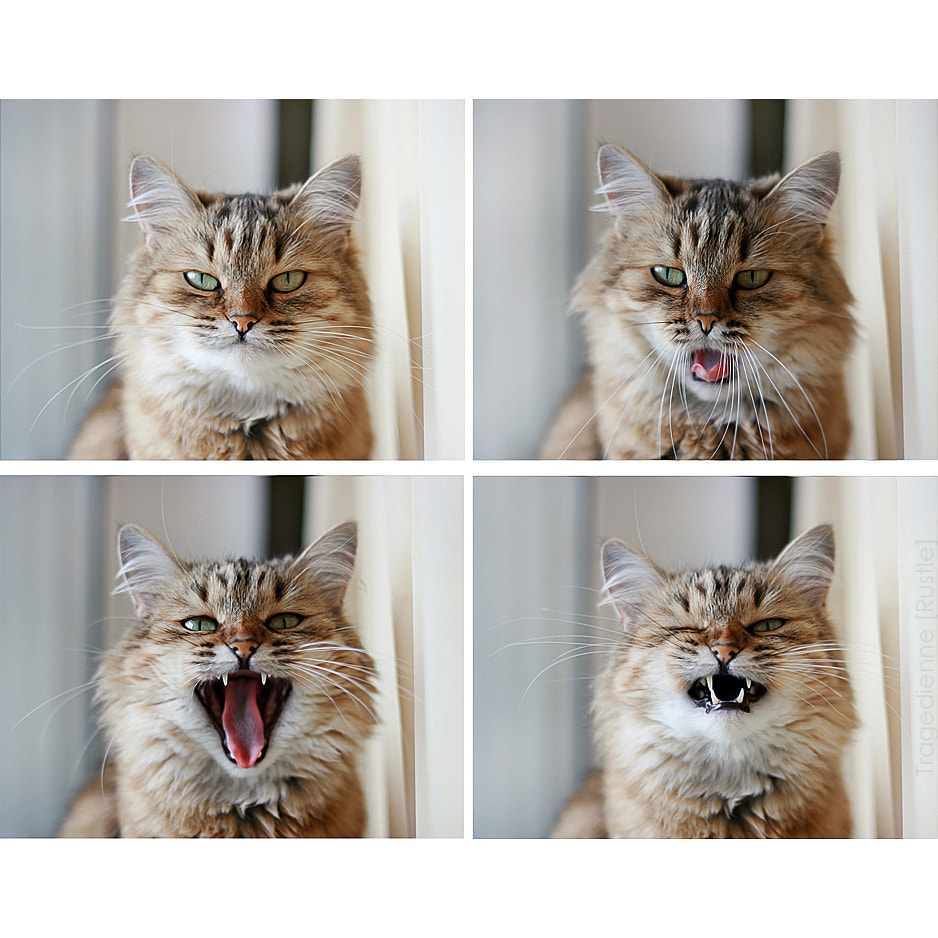 Photograph [Cat`s Mood] by Tragedienne [Rustle] on 500px