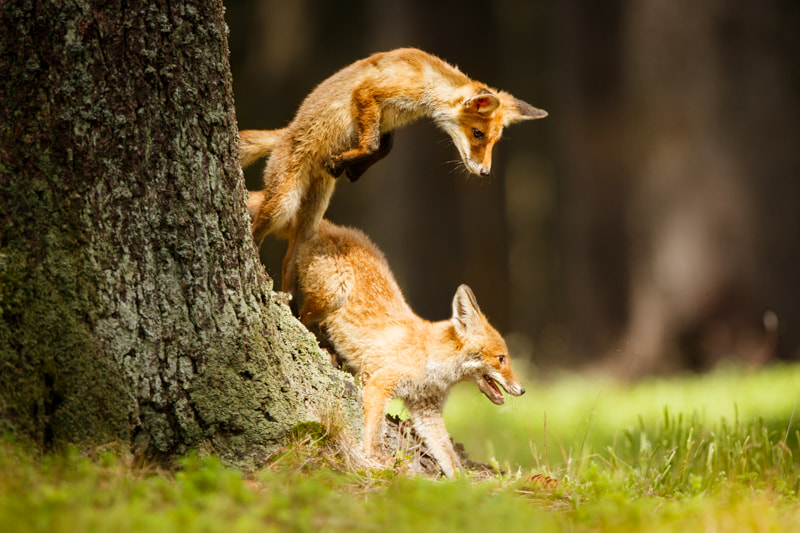 Attack From Above by Ales Gola on 500px.com