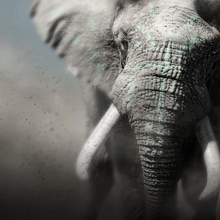 Nubian Elephant