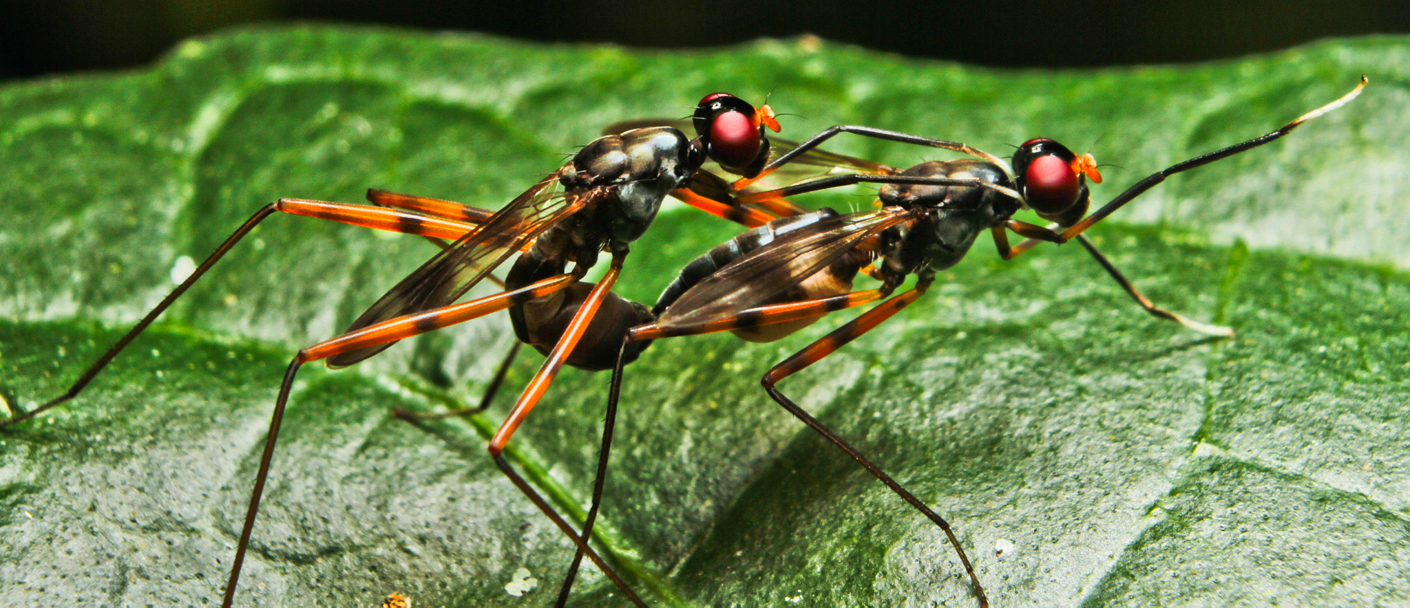 Photograph mating insect by rahmat Othman on 500px
