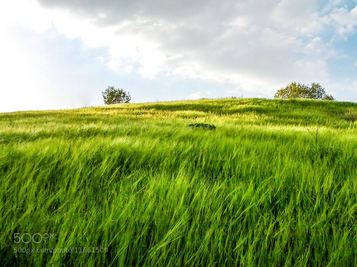 Photograph Green  by Red Danyar on 500px