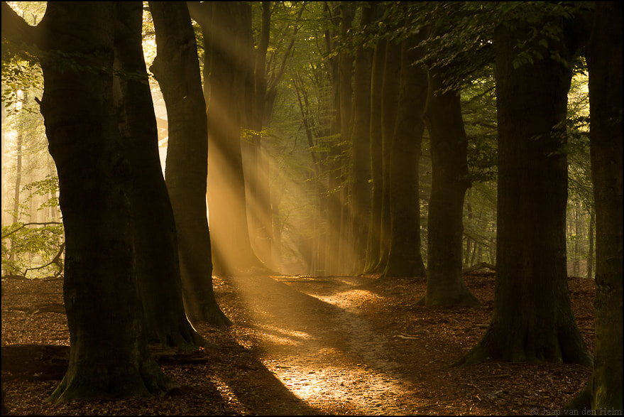 Photograph Morning rays by Jaap van den Helm on 500px