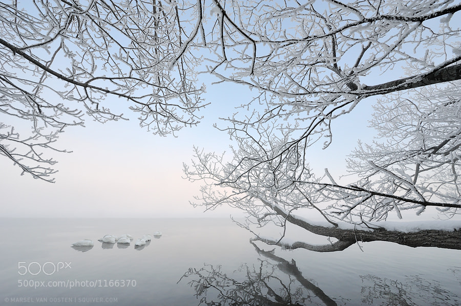 Photograph White Silence by Marsel van Oosten on 500px